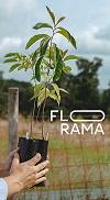 AOfrez des arbres - FLORAMA